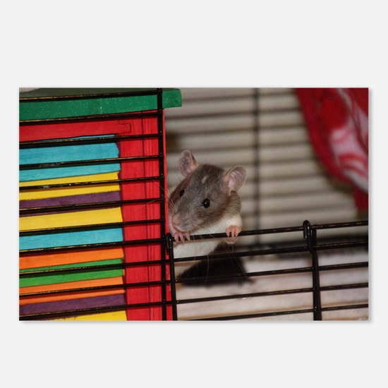 IMG_3192 baby hooded rat Postcards (Package of 8)
