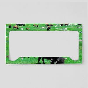 Buffalo 13X9 License Plate Holder