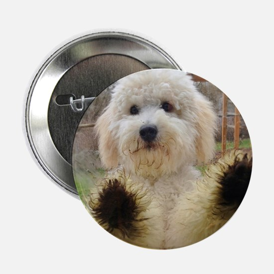 """Goldendoodle Puppy Dog 2.25"""" Button"""