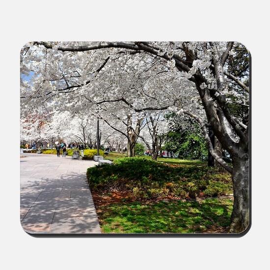 Cherry Blossoms 14X10 Mousepad