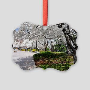 Cherry Blossoms 15X11 Picture Ornament