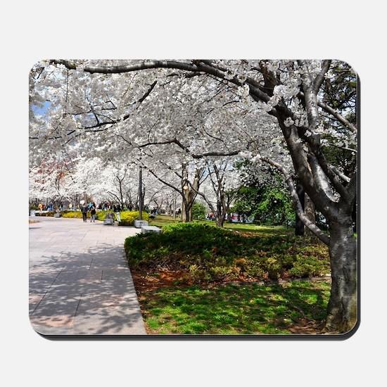Cherry Blossoms 15X11 Mousepad