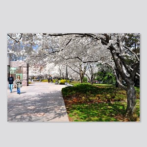 Cherry Blossoms 18X12 Ori Postcards (Package of 8)