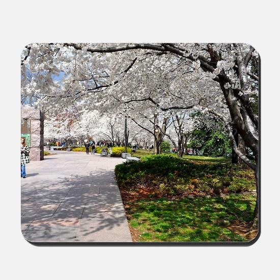 Cherry Blossoms 13X9 Mousepad