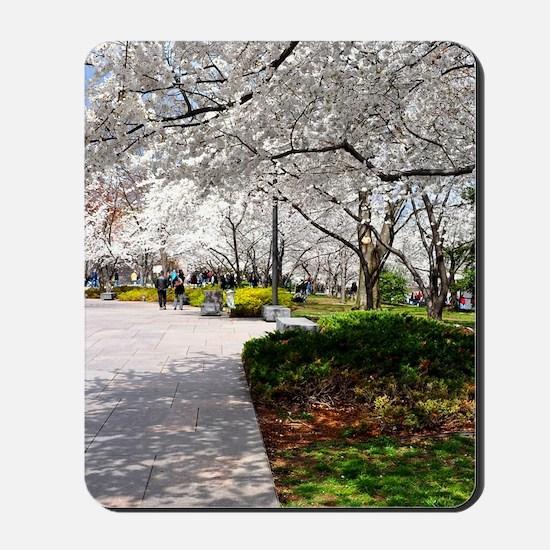 Cherry Blossoms 4X6 Mousepad
