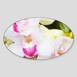 Beautiful White Orchids Sticker (Oval)
