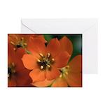 Orange Star Flower Greeting Cards