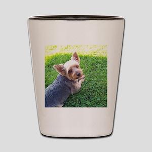 Attention dog loverAdorable little York Shot Glass