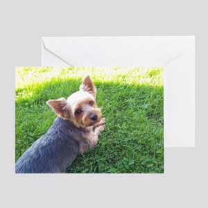 Attention dog loverAdorable little Y Greeting Card