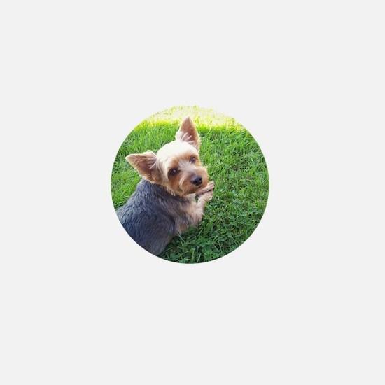 Attention dog loverAdorable little Yor Mini Button