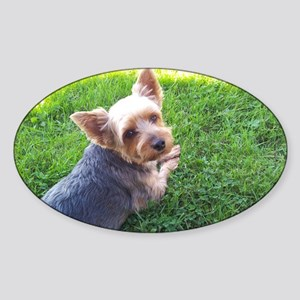 Attention dog loverAdorable little  Sticker (Oval)