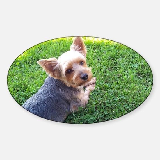 Attention dog loverAdorable little  Sticker (Oval)