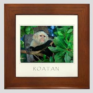 Monkey Roatan Framed Tile