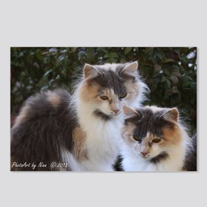 Calico Cats Postcards (Package of 8)