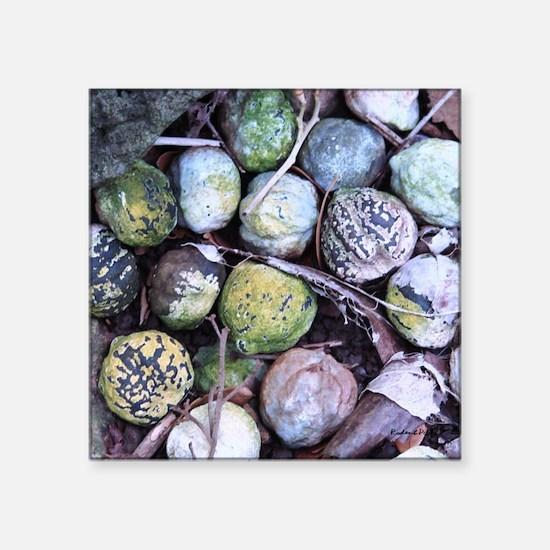"Nuts about Molokai Square Sticker 3"" x 3"""