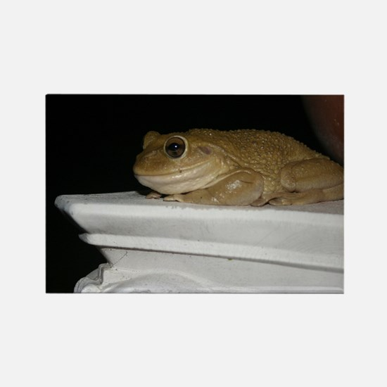 Happy Frog 2 Rectangle Magnet