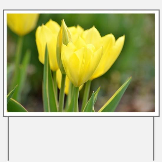 Yellow Tulips Yard Sign