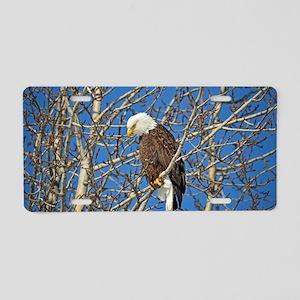 Magnificent Bald Eagle Aluminum License Plate