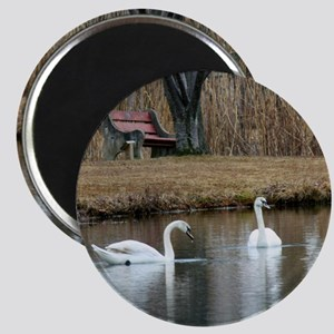 Baby Swans in new Home Magnet