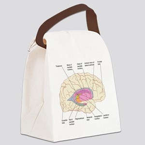 Basal ganglia, artwork Canvas Lunch Bag