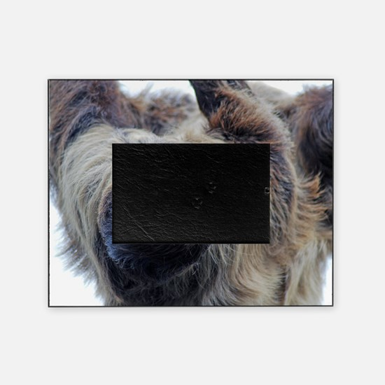 Sloth Throw Pillow Picture Frame