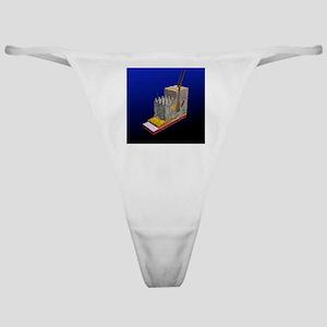 Skin cross-section, artwork Classic Thong