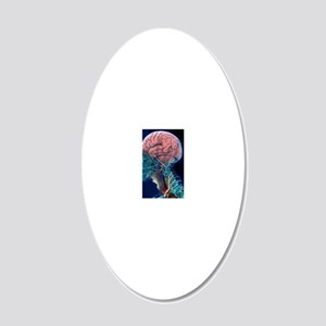 Human head anatomy, artwork 20x12 Oval Wall Decal
