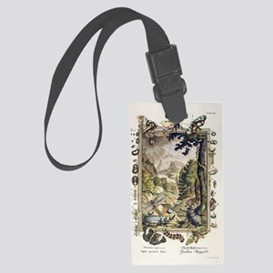 1731 Johann Scheuchzer Creation  Large Luggage Tag