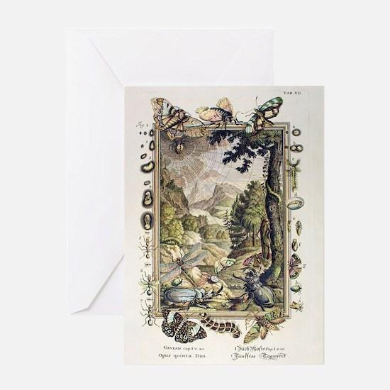 1731 Johann Scheuchzer Creation 5/6t Greeting Card