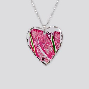 Skin section, light micrograp Necklace Heart Charm