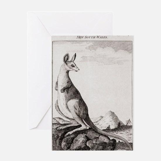 18th century engraving of a kangaroo Greeting Card