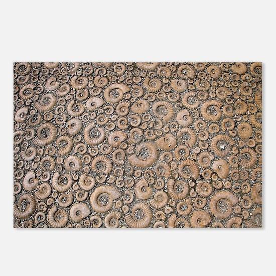 Ammonite paving stones Postcards (Package of 8)