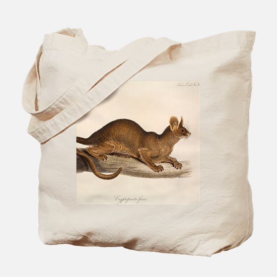 1835 Fossa Crytoprocta by Edward Lear Tote Bag