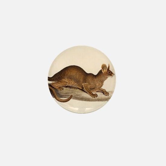 1835 Fossa Crytoprocta by Edward Lear Mini Button