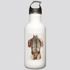 Circulatory system, 19 Stainless Water Bottle 1.0L