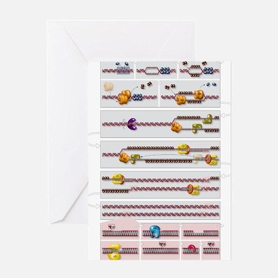 DNA replication process, diagram Greeting Card