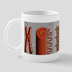 Chromatin condensation, diagram Mug