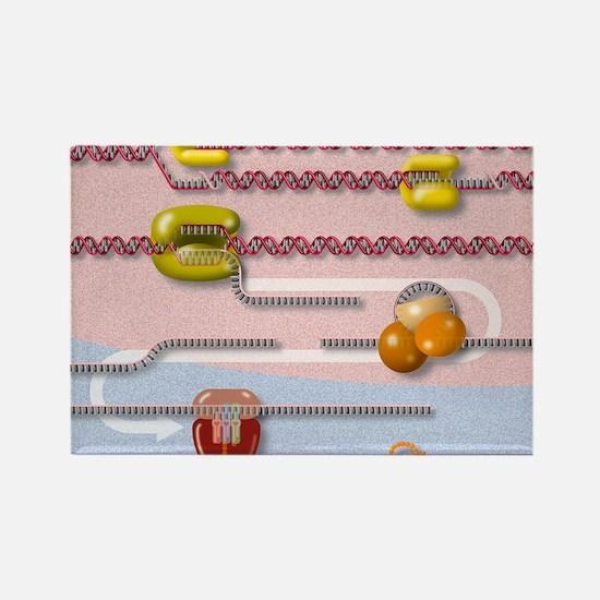 Genetic molecular mechanisms, art Rectangle Magnet