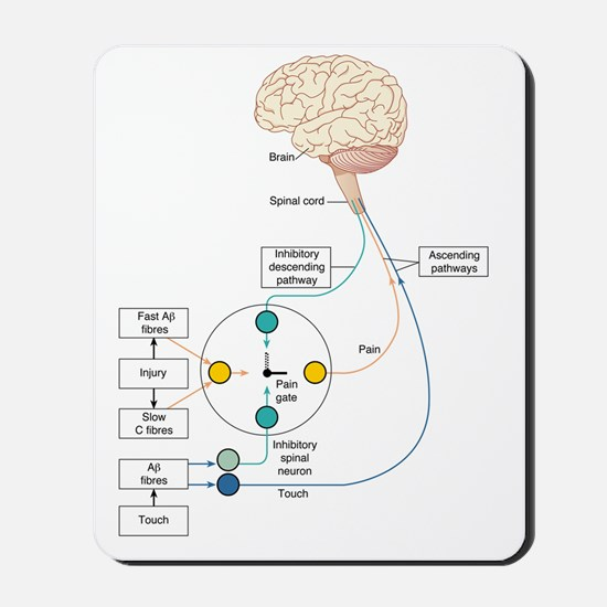 Gate control theory of pain, artwork Mousepad
