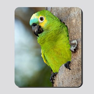 Blue-fronted parrot Mousepad