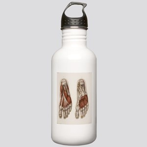 Foot anatomy, 19th Cen Stainless Water Bottle 1.0L