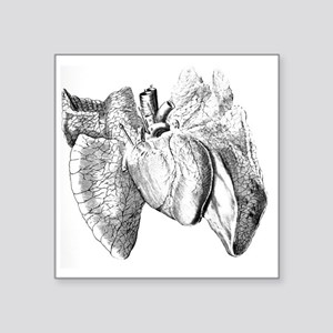 "Heart and lung anatomy, 17t Square Sticker 3"" x 3"""