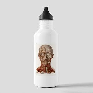 Head vascular anatomy, Stainless Water Bottle 1.0L
