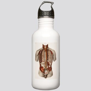 Human arteries, 19th C Stainless Water Bottle 1.0L