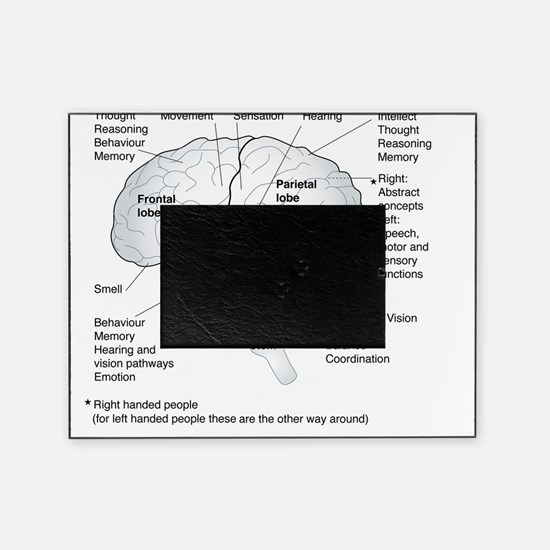 Functional areas of the brain, artwo Picture Frame
