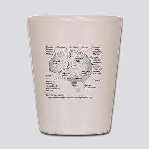 Functional areas of the brain, artwork Shot Glass