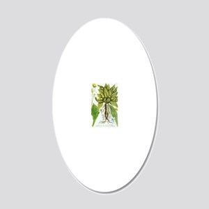 Mandrake plant, historical a 20x12 Oval Wall Decal