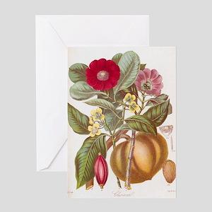 Gamboge flowers, 19th century Greeting Card
