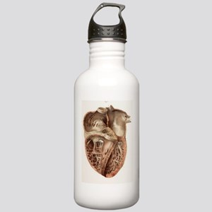 Heart anatomy, 19th Ce Stainless Water Bottle 1.0L