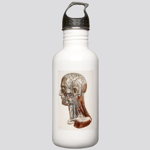 Head and neck anatomy, Stainless Water Bottle 1.0L